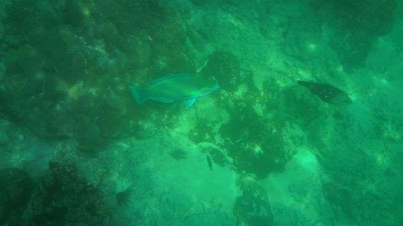 nochmal ein Fisch